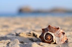 conchiglia-spiaggia